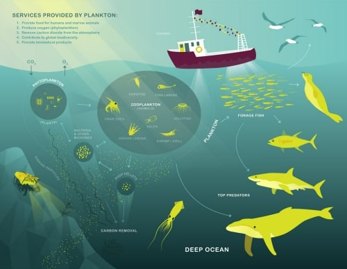 Data Science Bowl Marine Biology Kaggle Deep Learning
