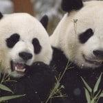 14 Best Python Pandas Features