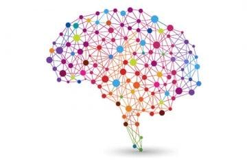 Brain_withshadow_optimized